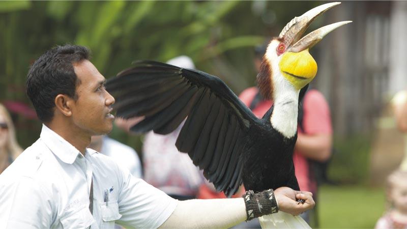 Bali Rainforest Bird Park