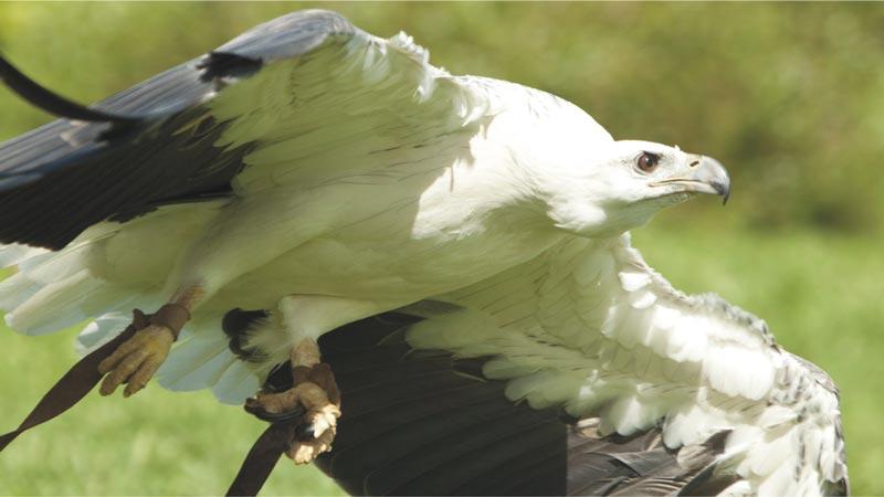 Basic Instinct - Bali Bird Park