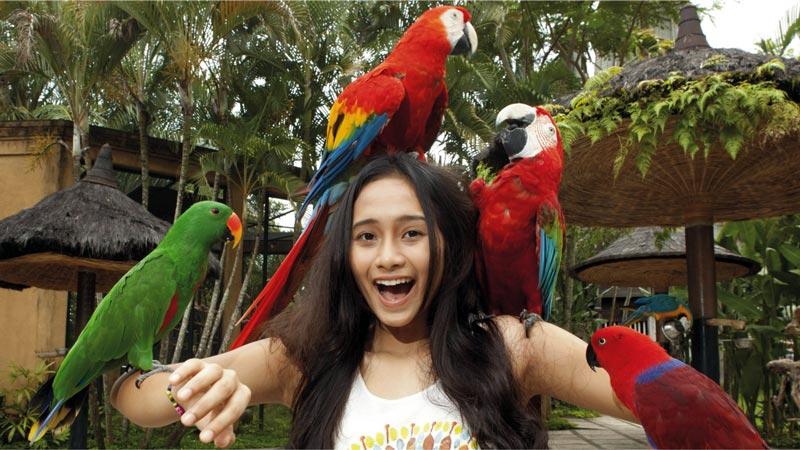 Bird Species Collection - Bali Bird Park
