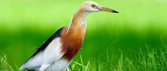 Bird Watching In Bali