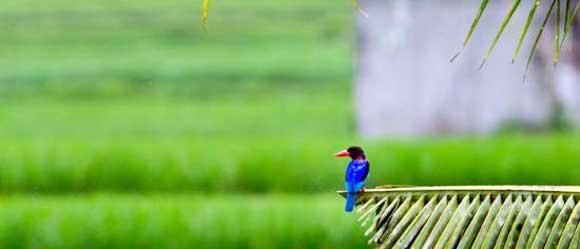 Bird Watching Ubud Bali