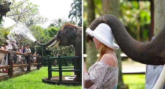 Taro Elephant Safari Park Bali