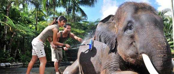 bali elephant bathing