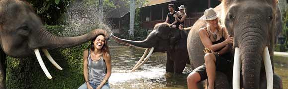 the elephant safari park lodge in taro