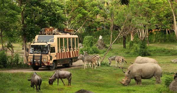 Bali Safari Journey