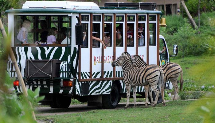 Safari Journey In Bali