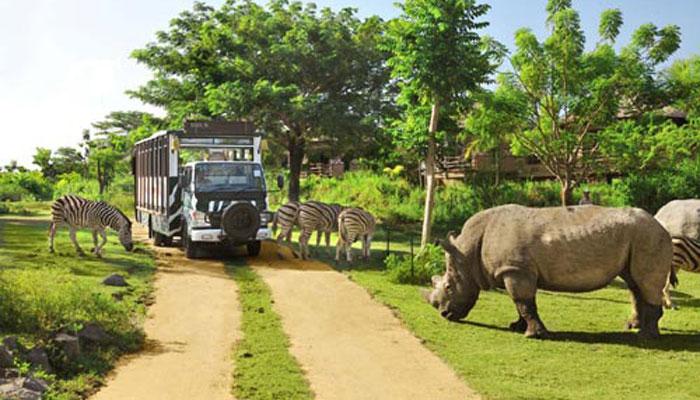 Bali Safari Journey 1