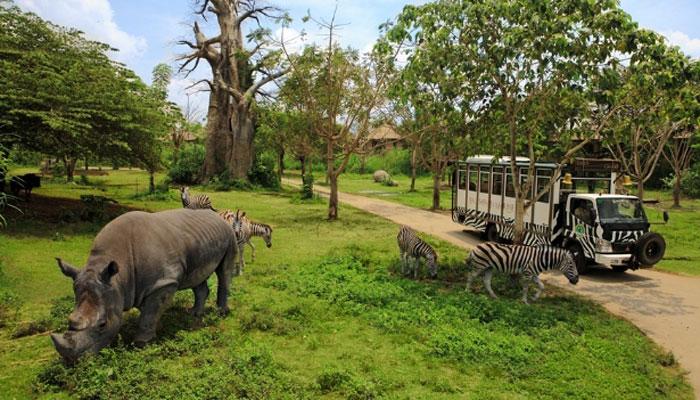 Bali Safari Journey 2
