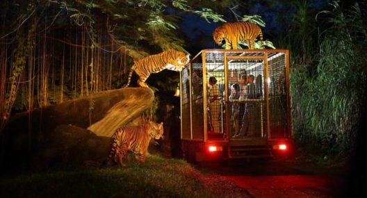 Night Safari Bali Marine Park Tour