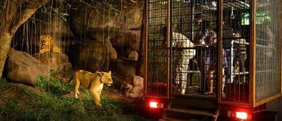 Night Safari Show And Dinner Bali