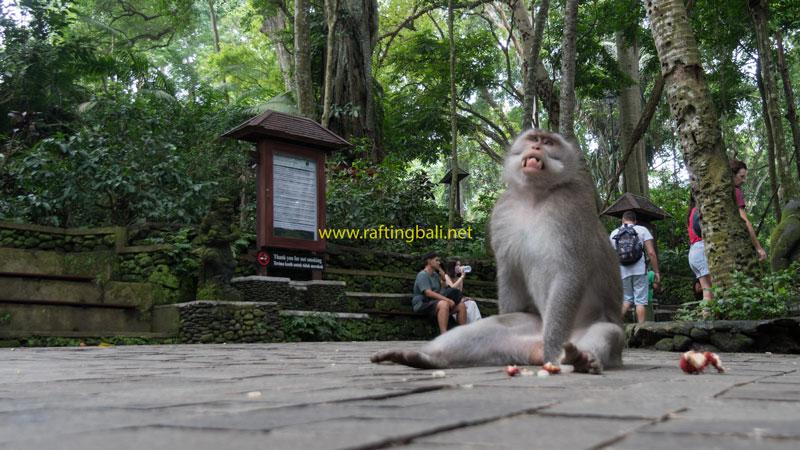 Holiday Guides To Monkey Forest Ubud