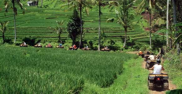 ATV Ride Surround By Rice Field