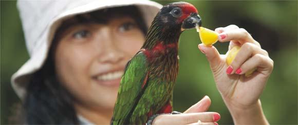Papua Rainforest Feeding