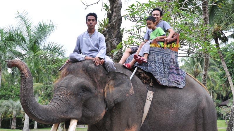 Mason Adventure Elephant Safari Ride