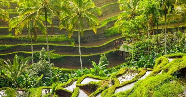How To Spend A Day In Ubud