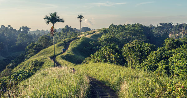 Campuhan Hill Ubud Ridge Walk
