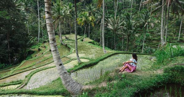 Ubud Tourism Attraction