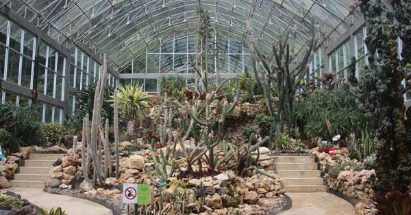 Botanical Garden Cactus Green House - Bali Nature Tourism
