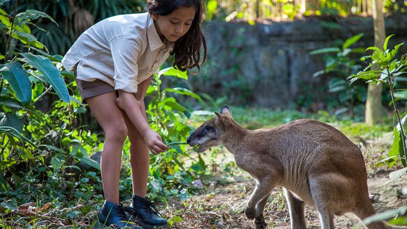 Bali Zoo Recreation Attraction
