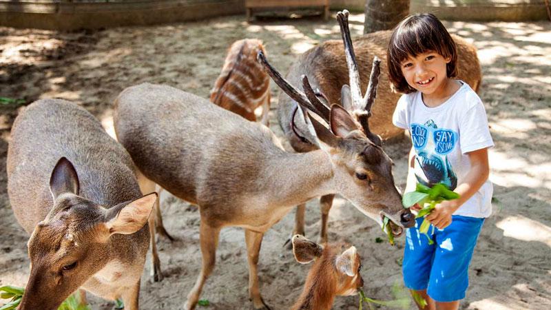 Petting Zoo In Bali