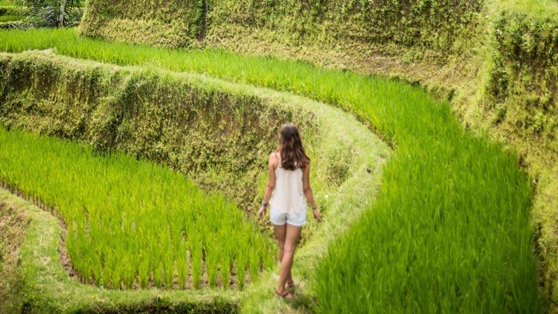 Tegalalang Rice Terrace Ubud Bali