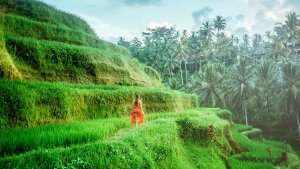 Bali Rice Terrace Scenery