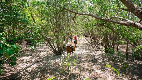 Horseback Riding The Menjangan Resort